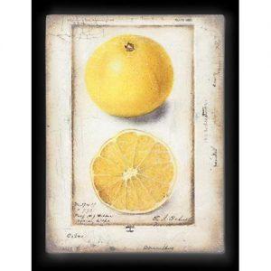 Sid Dickens Memory Blocks T 371 CitronCollection: 2016 – Spring : Awakening